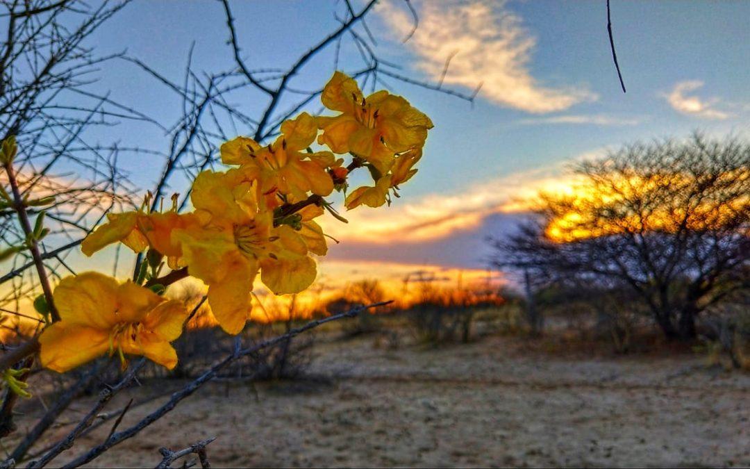 Kalahari Blooms